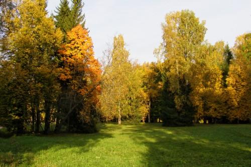 Здесь была осень