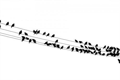 Птицы, Ломоносов, 2006