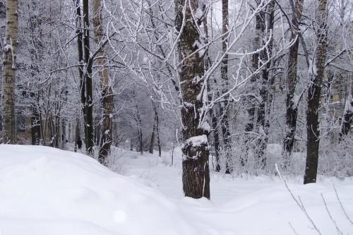 snow101001