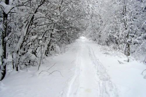 Зима, Ленинградская область, 2009