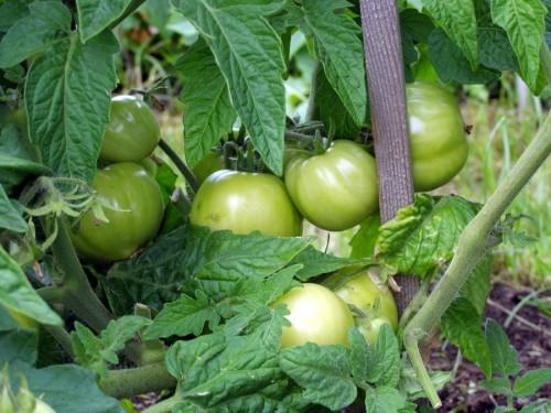 Урожай 2010